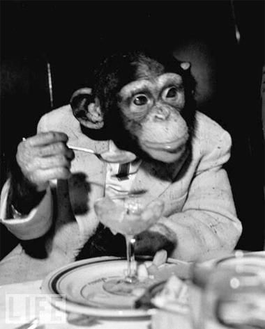 Chimps R Us.
