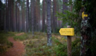 Trail pointer