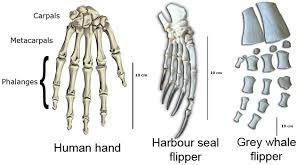 Hand to flipper